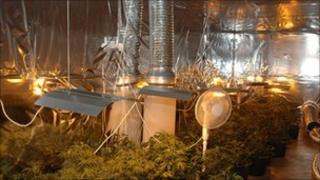 Paycocke Road cannabis factory
