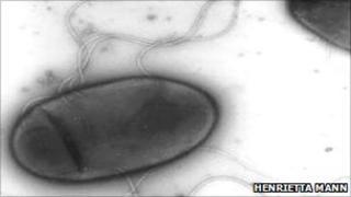 H. titanicae bacterium (H Mann)