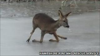 Deer on ice