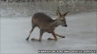 Deer on ice