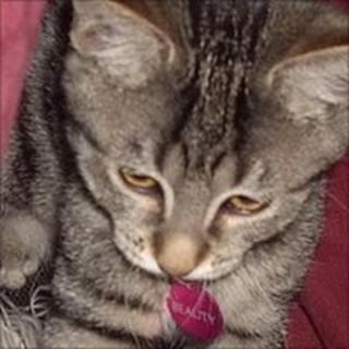 Tabby cat on John Hemming's blog