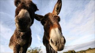 Winning photograph - Donkeys at Linwood by Jason Chalk