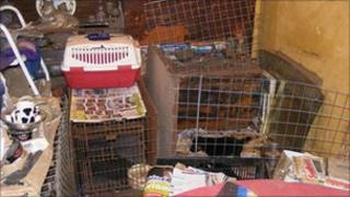 Cages used by Graham to keep dogs