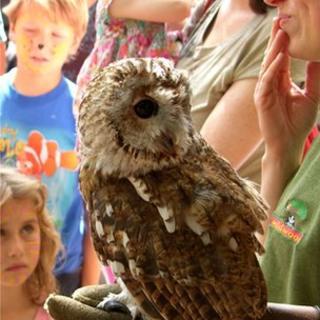 Owl at Wildwood Trust