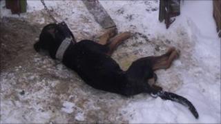 Dead dog in alleyway