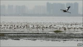 Mai Po Nature Reserve in Hong Kong is a haven for bird life