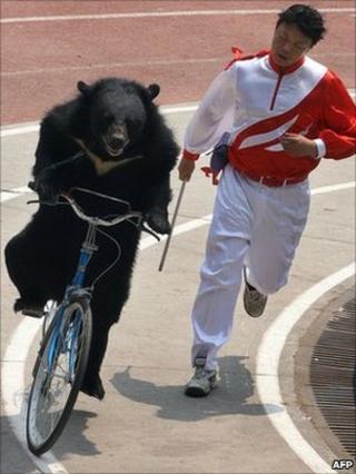 Bear on bicycle at Shanghai Wild Animal park, 02 May 2007