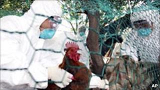Men in bio suits prepare to slaughter chicken, 2008