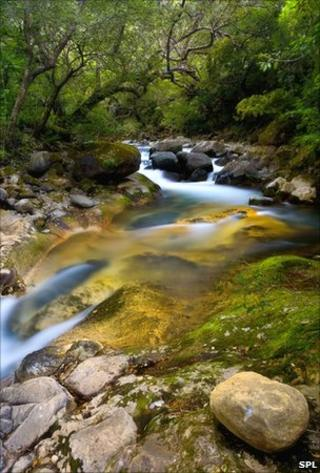 Forest stream in Costa Rica