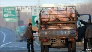 File image of a truck carrying pigs stopped on a Chinese highway