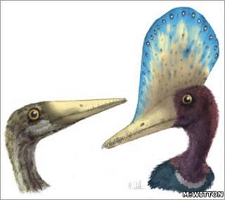 Pterosaurs (Witton)