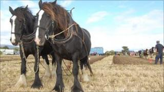 Ploughing on the Isle of Man