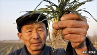 A farmer hold dried-up wheat seedlings aloft in drought-hit Zouping county, Shandong province on 24 January 2011