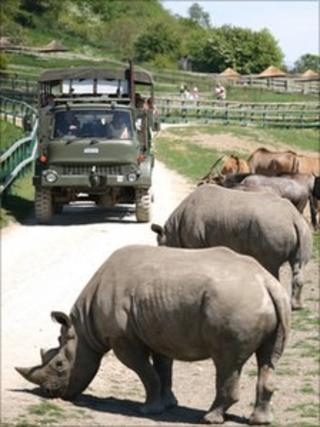African Experience at Port Lympne Wild Animal Park