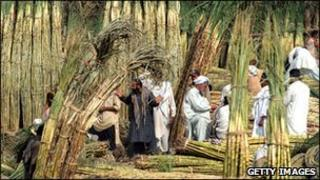 Traders sell sugar cane