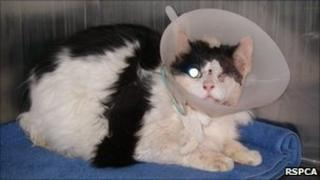 The injured cat