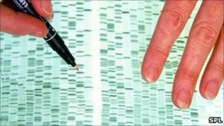 A DNA profile being examined by a researcher