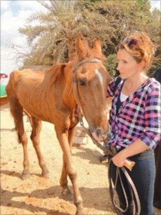 Beth Sartain feeding one of the hungry horses