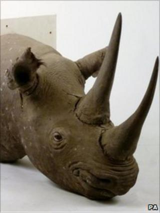 The stolen stuffed rhino head stolen from Sworders Auctioneers