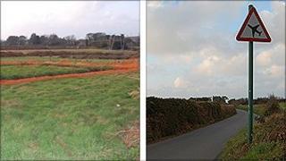Le Messurier's field and La Mare Road