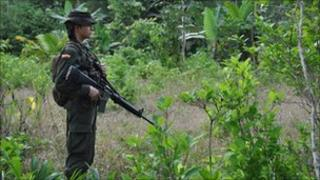 Policeman guarding a coca field during eradication efforts