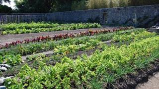 Victorian Walled Kitchen Garden at Saumarez Park, Guernsey