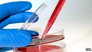 Cell culture work