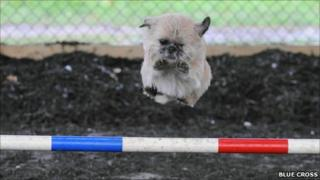 Dudley jumps over pole during training