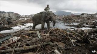 Elephant clearing debris two weeks after Asian Tsunami 24 Dec 2004