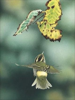 Pallas's warbler