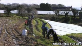 Jersey Trees for Life planting hedges