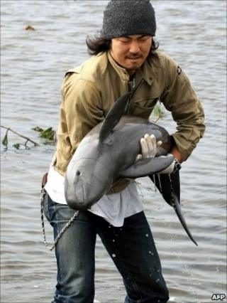 Japanese pet shop owner Ryo Taira rescues a young finless porpoise from a flooded rice paddy, Sendai, Miyagi prefecture, on March 23, 2011