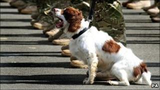 A dog from the 104 Military Working Dog Squadron