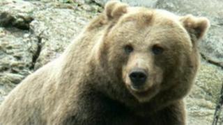 A brown bear (generic image)