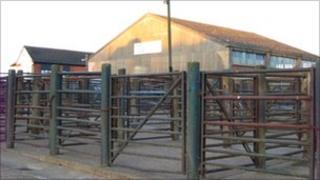 Livestock market in Thrapston.