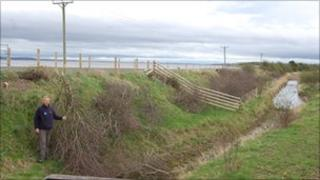 Destroyed hawthorn trees on Flintshire coastal path