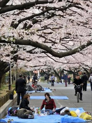 People spread blue sheets on the ground under cherry trees at Tokyo's Ueno Park