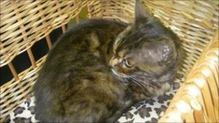 Essie the stowaway cat