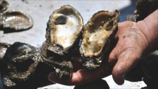 Dead oyster