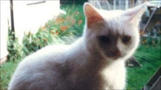JimJim, the injured cat