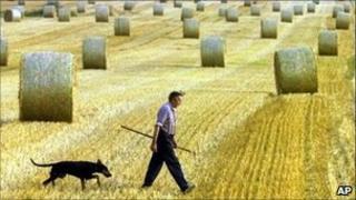 A German farmer in a grain field in Mechow, in the eastern state of Brandenburg