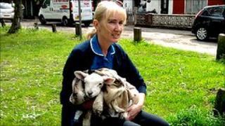 Gillian Powell and lamb