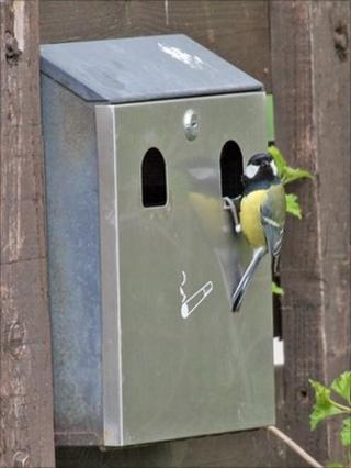 Bird at ashtray nest