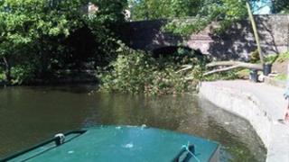 Tree in Regent's Canal
