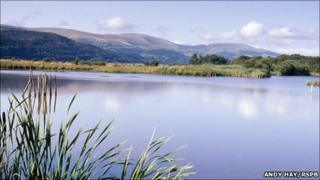Ynys-hir nature reserve (Andy Hay RSPB images)