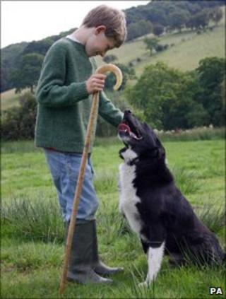Ellis Rees, 10, with Jack, his three-legged sheepdog