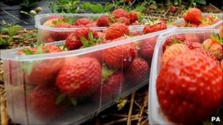 Strawberries picked from a farm