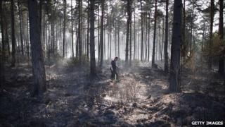 Swinley Forest in Berkshire after fire