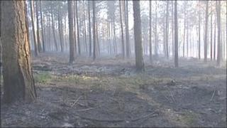Staffordshire woodland