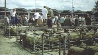An auctioneer and assistants can be seen selling sheep, pigs and produce in July 1985
